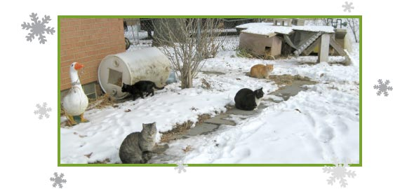Picture Of A Feral Cat Colony In The Snow